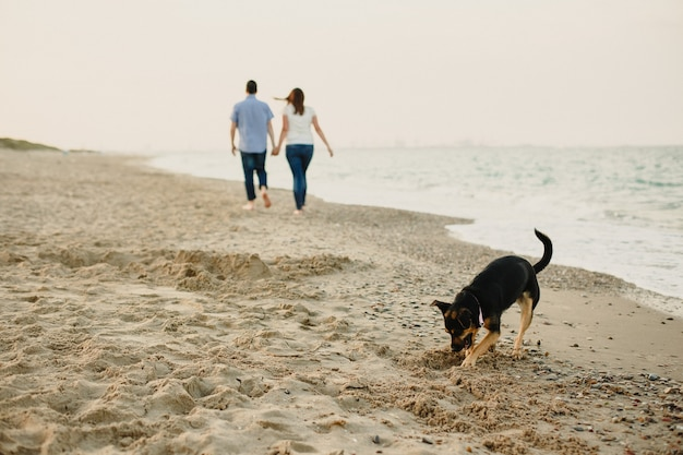 Hunde spielen am strand