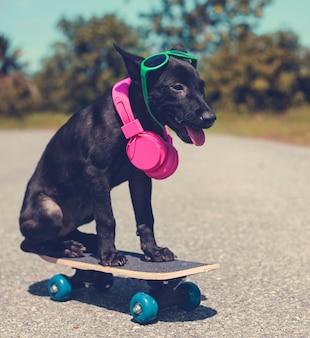 Hundefreund nettes hunde lächeln