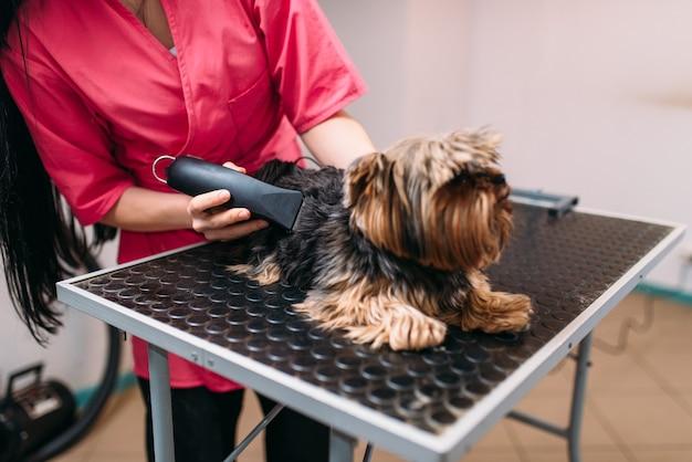 Hundefriseur mit haarschnittmaschine, kleine hundefrisur. professioneller pflege- und reinigungsservice für haustiere