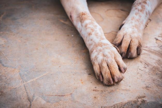 Hundefüße auf dem boden. thailändische haustiere.