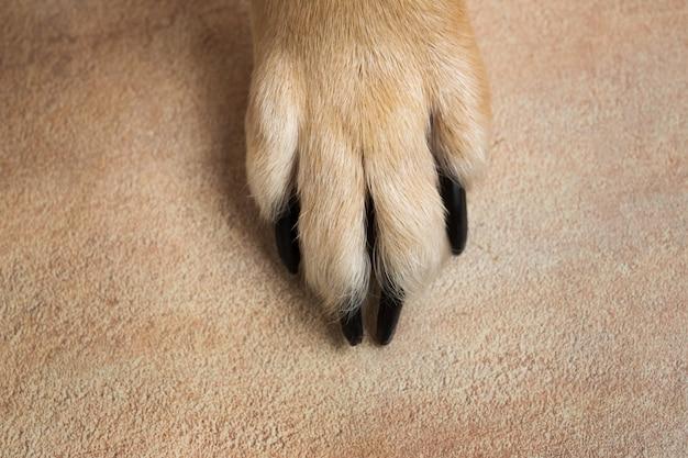 Hundefüße und -beine texturoberfläche. schließen sie herauf bild einer pfote des obdachlosen hundes. hauttextur.