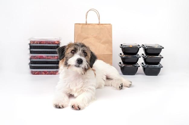 Hundefutter-lieferkonzept und natürliches gesundes futter. platz für text und modell.