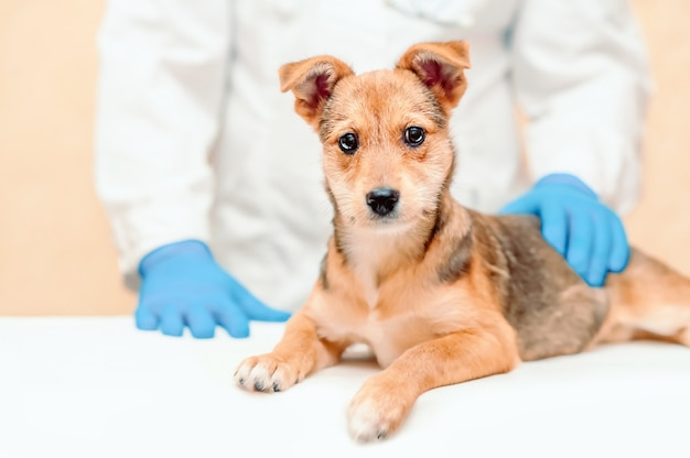 Hundegesundheitsberatung, bereiten sie ihre hunde auf einen tierarzttermin vor.