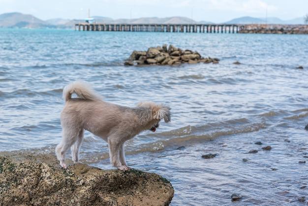 Hundeglücklicher spaß auf felsigem strand wenn reise in meer
