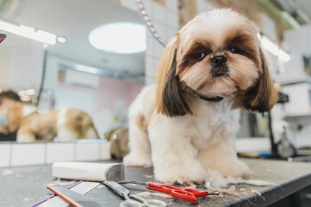 Hundepflege pflege von hunden im salon hochwertiges foto