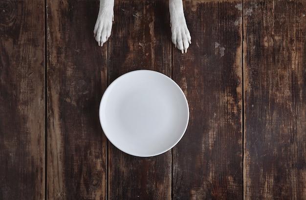 Hundepfoten auf altem vintage gebürstetem holztisch mit weißer leerer keramikplatte draufsicht. konzept