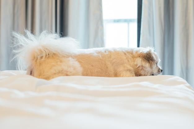 Hundeschlaf liegt auf dem bett im schlafzimmer zu hause oder im hotel