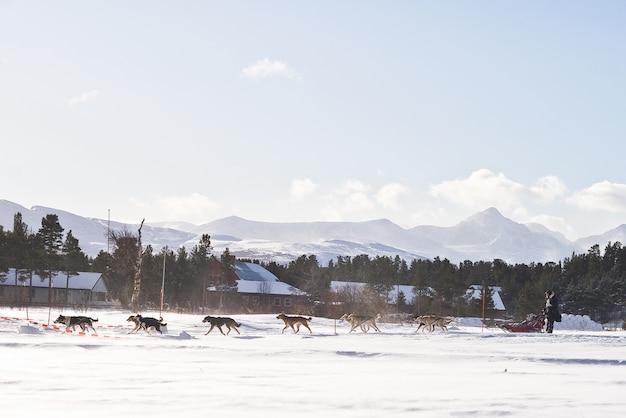 Hundeschlittenrennen winter norwegen schnee