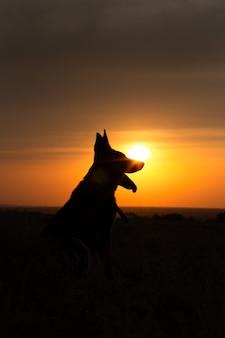 Hundesilhouette bei sonnenuntergang auf dem feld