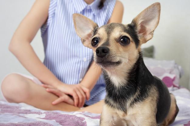 Hundespielzeugterrier mit herrin schaut dich an