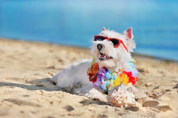 Hundetragende sonnenbrille und blumengirlande, die oben zum sopy raumbereich schauen