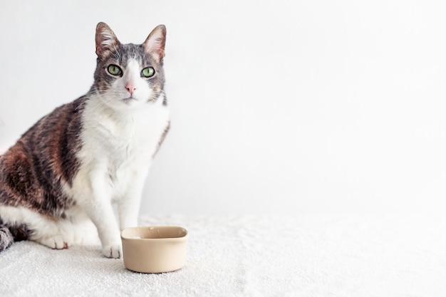 Hungrige und durstige katze nahe schüssel, die kamera betrachtet