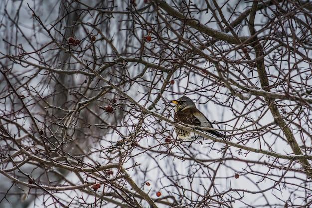 Hungriger vogel auf einem baum