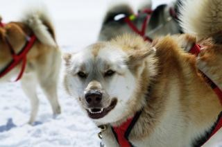 Huskies am berg