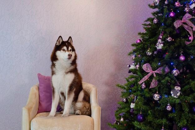 Husky hund sitzt in der nähe des vintage-konzepts des weihnachtsbaums
