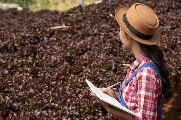 Hydrokultur-system, gemüse und kräuter pflanzen, ohne den boden für die gesundheit zu verwenden