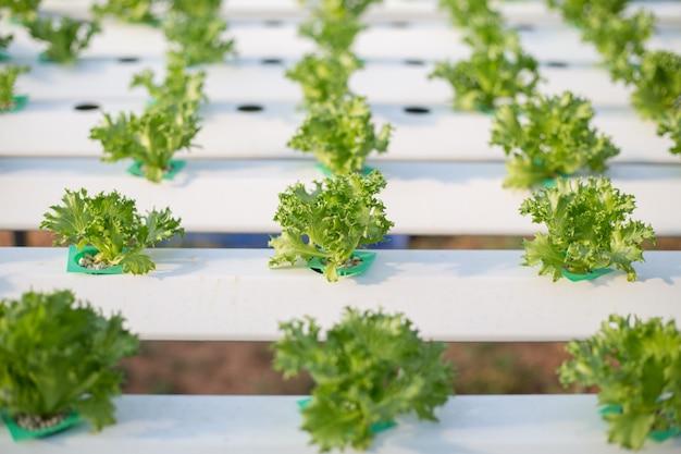 Hydrokultur verfahren zum pflanzen von pflanzen mit mineralischen nährlösungen in wasser