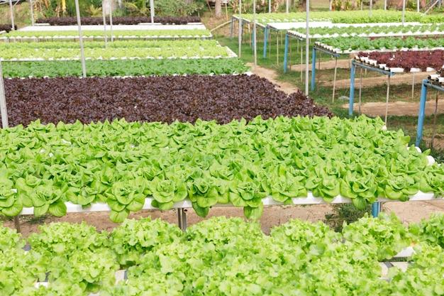 Hydroponik-methode für den pflanzenanbau