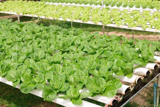 Hydroponik-verfahren zur züchtung von pflanzen mit mineralischen nährstofflösungen