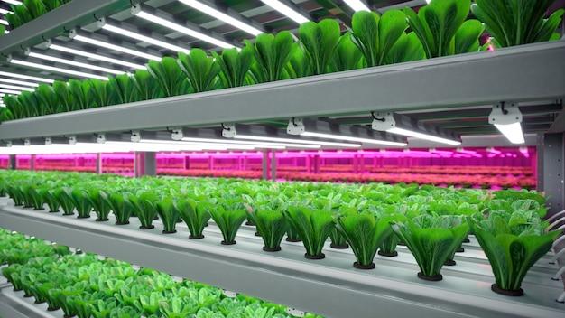 Hydroponische indoor-gemüsepflanzenfabrik im ausstellungsraumlager. innenraum der farm hydroponik. grüner salat. salat roman wächst im gewächshaus mit led-beleuchtung.