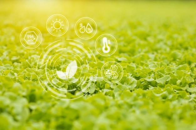 Hydroponisches gemüse wächst und sorgt für ein ausgewogenes verhältnis von wasser und sauerstoff.