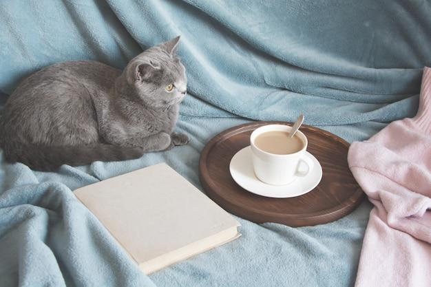 Hygge und gemütliches konzept. britische nette katze, die auf gemütlichem blau stillsteht, pled couch im hauptinnenraum des wohnzimmers.