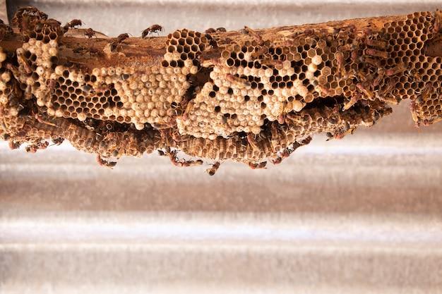 Hymenoptera auf holz. wespennest.