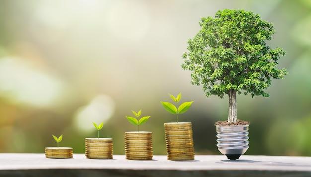 Idee des geldwachstumsschrittes mit baum