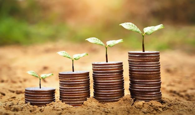 Ideenpflanze mit geld, das auf boden wächst.
