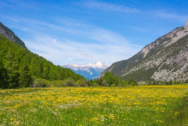 Idyllische berglandschaft der grünen und gelben blühenden wiese mit schneebedecktem gebirgszug ecrins-gebirgszug im hintergrund.