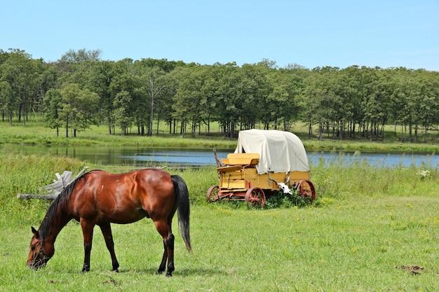 Idyllische ländliche landschaft, chuckwagen und ein pferd auf einer wiese in oklahoma