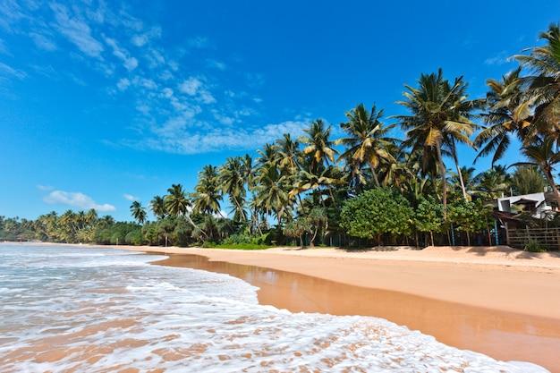Idyllischer strand. sri lanka