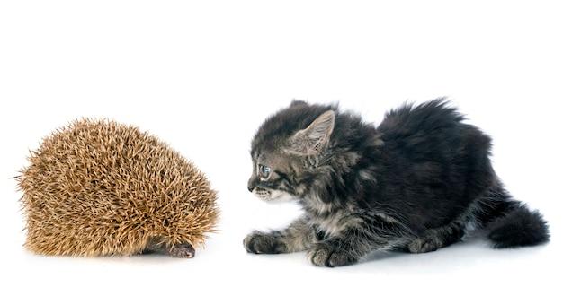 Igel und kätzchen