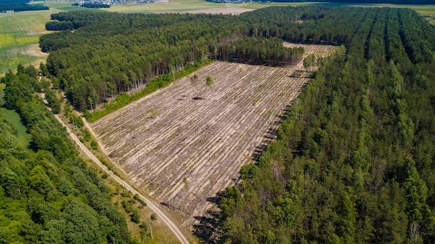 Illegale abholzungsansicht von der drohne