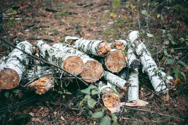 Illegales fällen von wald und bäumen in einem wildpark