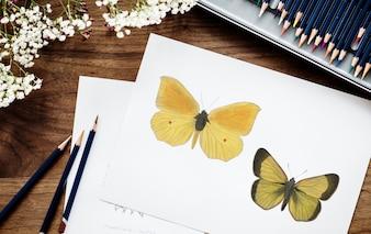 Illustrator Färbung Schmetterling