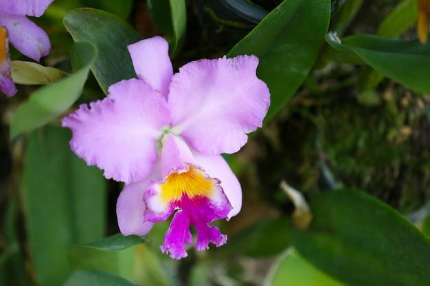 Im blumengarten blühen rosa orchideen.