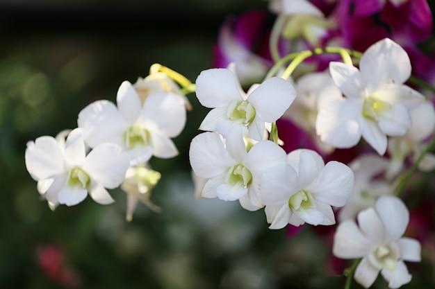 Im blumengarten blühen weiße orchideen.