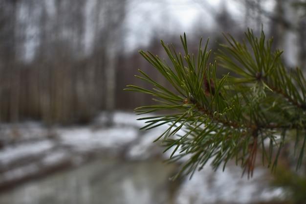 Im frühling schmilzt der schnee im wald