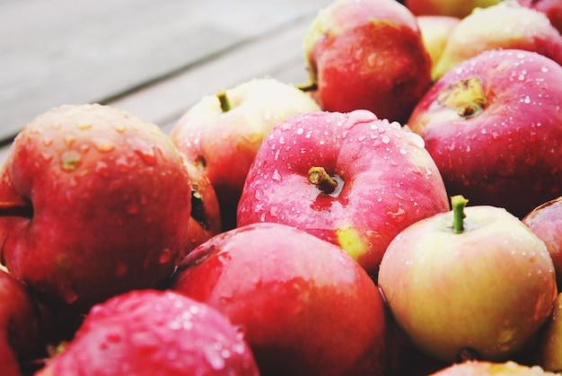 Im herbst im bio-hausgarten geerntete äpfel