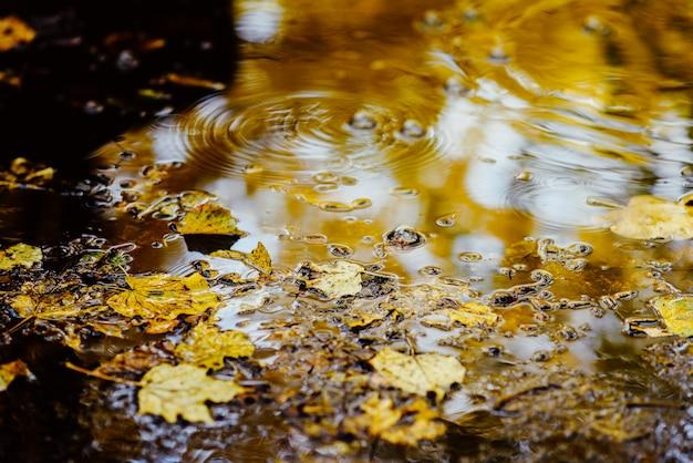 Im park liegen gelbe blätter in einer pfütze