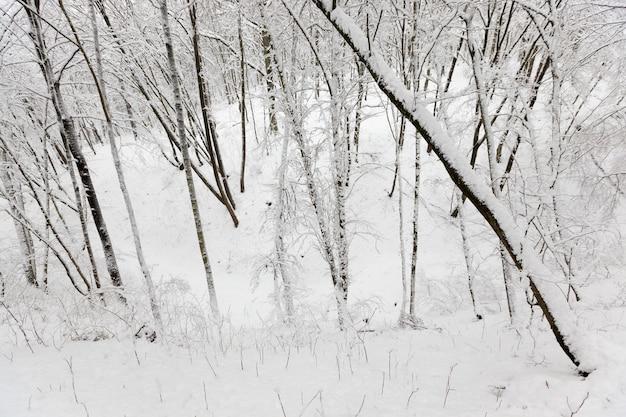 Im schnee, laubbäume in der wintersaison, kaltes winterwetter in der natur nach schneefällen und frösten, laubbäume verschiedener rassen nach schneefall im park