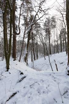 Im schnee, laubbäume in der wintersaison, kaltes winterwetter in der natur nach schneefällen und frösten, laubbäume verschiedener rassen nach schneefall im park Premium Fotos