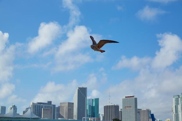 Im stadtzentrum gelegene skyline miamis mit der seemöwe, die florida fliegt