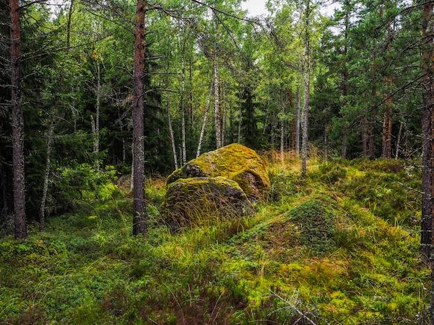 Im tiefen wald. der mystische regenwald. waldlandschaft mit mit moos bedeckten felsblöcken.