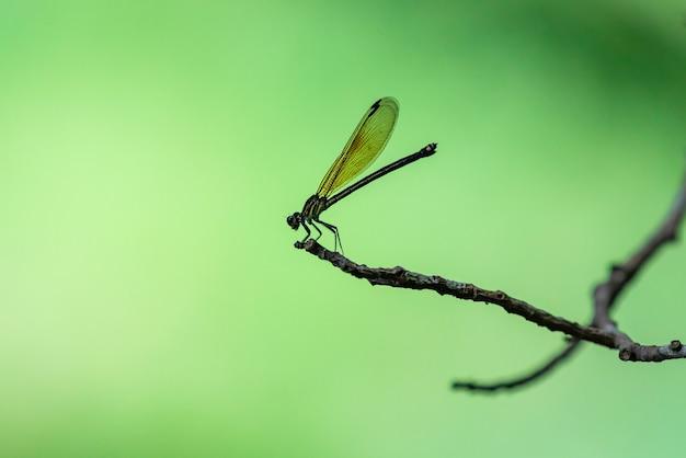 Im wald sitzen libellen auf ästen vor grünem hintergrund.