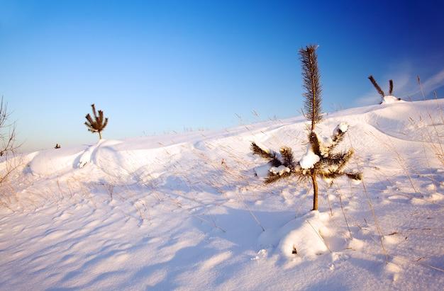 Im winter schneebedeckt