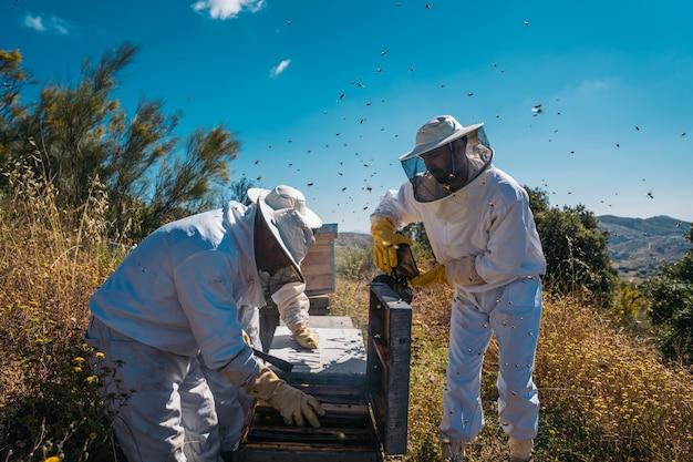 Imker arbeiten daran, honig zu sammeln. bio-imkerkonzept.