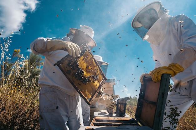Imker arbeiten daran, honig zu sammeln