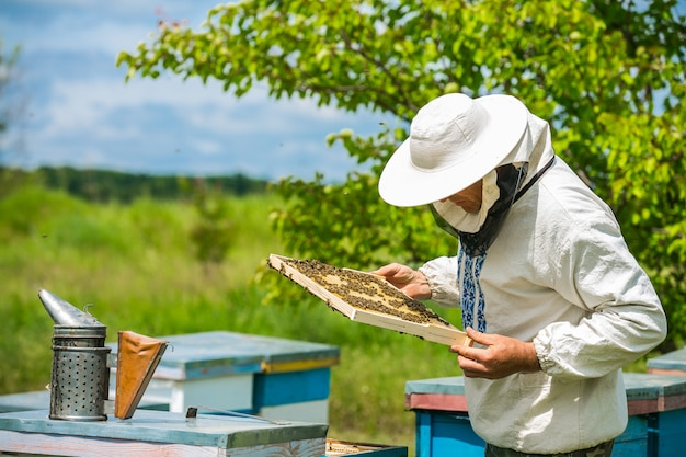Imker arbeitet in einem bienenstock - fügt rahmen hinzu und beobachtet bienen. imker inspiziert rahmen mit bienenwabe voller bienen. bienenhauskonzept
